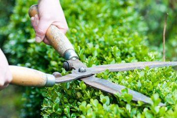 Taille et entretien du jardin